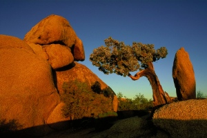 joshua_tree_national_park_by_hiro001