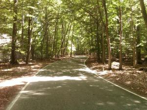 Tunnel-of-Trees-7-2011-0