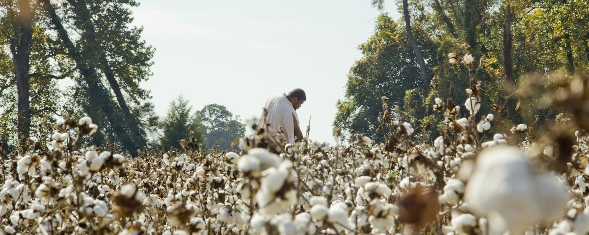 Michael-in-Cotton-Field